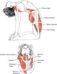 La postura del camello es una intensa flexión posterior.