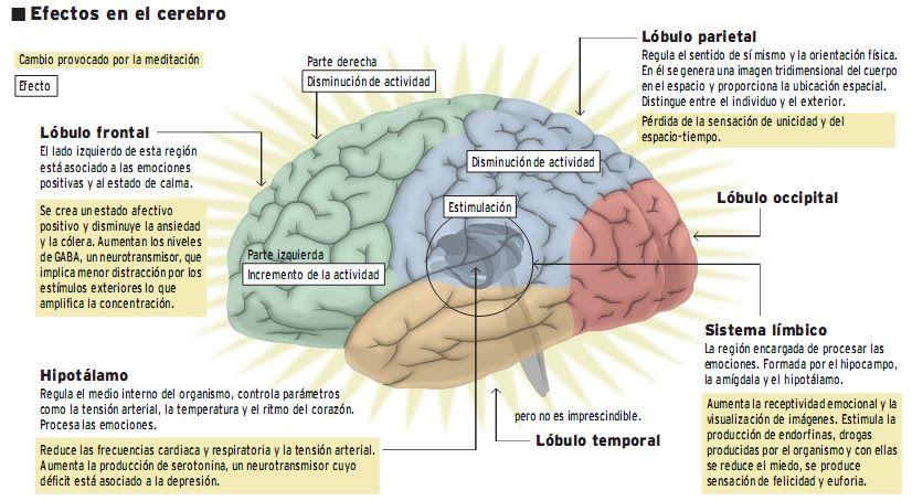 La neurociencia prueba los beneficios de la meditación para el cerebro.